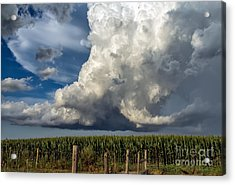 Summer Storm Acrylic Print by Lisa Phillips
