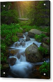 Summer Stream Acrylic Print by Darren  White