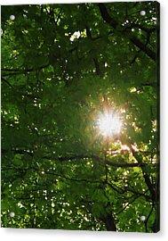 Summer Sun Acrylic Print by Dan Sproul