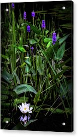 Acrylic Print featuring the photograph Summer Swamp 2017 by Bill Wakeley
