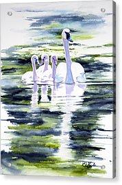 Summer Swans Acrylic Print