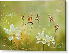 Summer Symphony Acrylic Print by Bonnie Barry