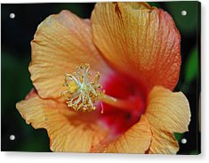 Summer Tones Acrylic Print by Jean Booth