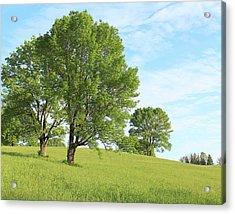 Summer Trees Acrylic Print