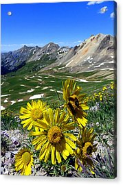 Acrylic Print featuring the photograph Summer Tundra by Karen Shackles