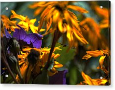 Summer Wanes Acrylic Print by Ross Powell