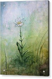 Summer Wildflower Acrylic Print