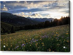 Summer Wildflowers And Quandary Peak Sunset Acrylic Print