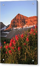Acrylic Print featuring the photograph Summer Wildflowers On Timpanogos. by Johnny Adolphson