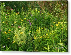 Acrylic Print featuring the photograph Summer Wildflowers by Smilin Eyes  Treasures