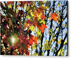 Summer's Gone Acrylic Print by JAMART Photography