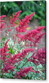 Summer's Offering Acrylic Print by Corinne Rhode