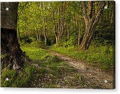 Price Lake Trail - Blue Ridge Parkway Acrylic Print