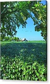 Summertime Blues Acrylic Print