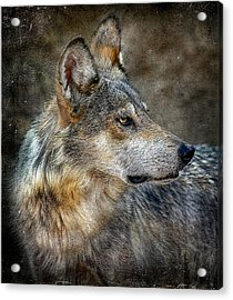Summertime Coated Wolf Acrylic Print