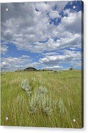 Summertime On The Prairie Acrylic Print