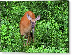Summertime Visitor Acrylic Print by Karol Livote
