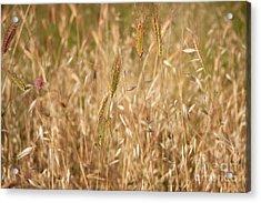 Summertime Whisper Acrylic Print by Julia Hiebaum