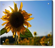 Sun And Sunflower Acrylic Print by Brian Bonham