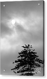 Sun And Tree Acrylic Print