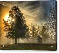 Acrylic Print featuring the photograph Sun And Trees by Sumoflam Photography