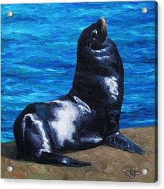 Sun Bathing Sea Lion Acrylic Print by Crista Forest