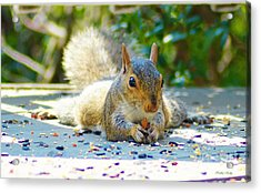 Sun Bathing Squirrel Acrylic Print by Kathy Kelly