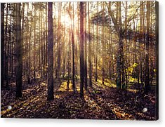 Sun Beams In The Autumn Forest Acrylic Print