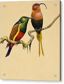 Sun Birds Acrylic Print by English School