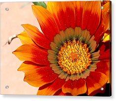 Sun Bloom Of Fire Acrylic Print by Edan Chapman