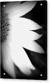 Sun Blur Bw Acrylic Print by Carolyn Stagger Cokley