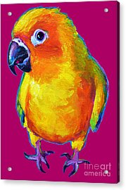 Sun Conure Parrot Acrylic Print