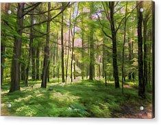 Acrylic Print featuring the photograph Sun Dappled Forest by John M Bailey