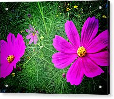 Acrylic Print featuring the photograph Sun-drenched by Olivier Calas