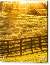 Sun-drenched Pasture Acrylic Print by Mark Miller