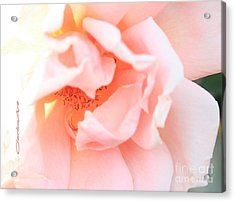 Sun-drenched Rose Acrylic Print