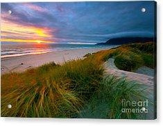 Sun Dunes Acrylic Print
