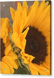 Acrylic Print featuring the digital art Sun Flower by Jana Russon
