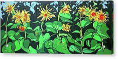 Sun Flowers Acrylic Print