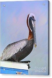 Sun Glow Pelican Acrylic Print by Deborah Benoit