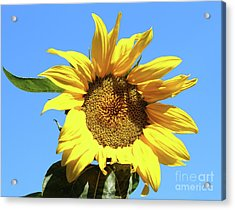 Sun In The Sky Acrylic Print