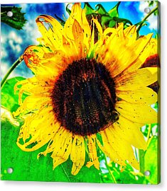 Acrylic Print featuring the photograph Sun by Jame Hayes
