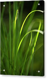 Sun-kissed Grass Acrylic Print by Christina Rollo