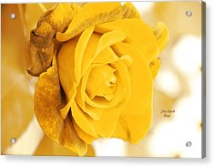 Acrylic Print featuring the photograph Sun Kissed Rose by Athala Carole Bruckner