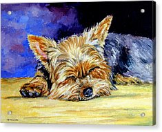 Sun Light Snoozer - Yorkshire Terrier Acrylic Print
