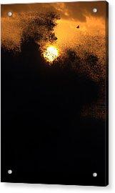 Sun Monster Acrylic Print by Brad Scott