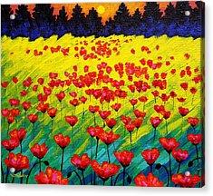 Sun Poppies Acrylic Print by John  Nolan
