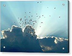 Sun Ray Aerobatics Blue Sky Acrylic Print