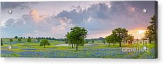 Sun Rising Over A Bluebonnet Field In Chappel Hill - Washington County Brenham Texas Acrylic Print