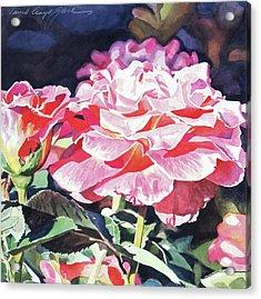 Sun Rose Acrylic Print